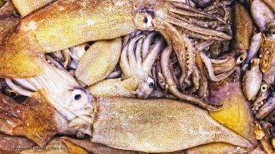 Cantina № 22 – Calamares a la romana (Frittierte Kalmare) © Hans Keller