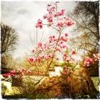 20140318_Pink Explosion... 18.03.2014, Chinesischer Garten) Foto © Hans Keller