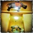 Flying Hippo... (03.05.2014, Cantatesaal) Foto © Hans Keller